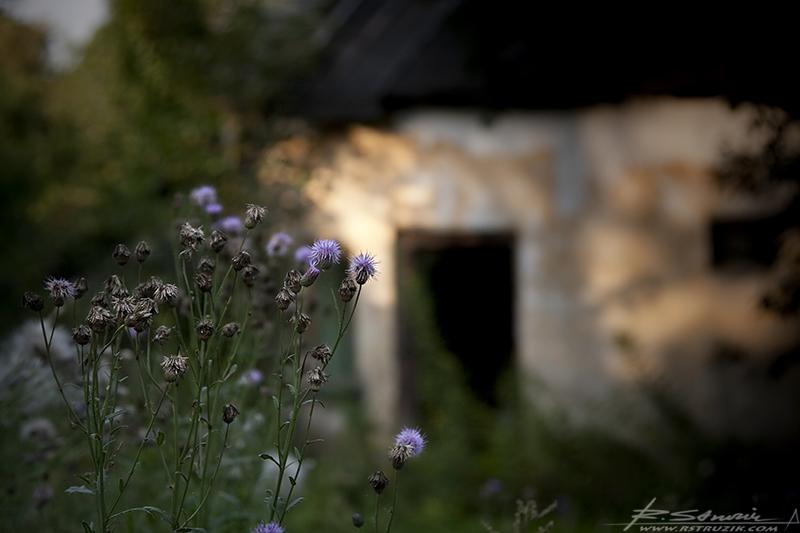 Bobolice. Sierpień 2009. Nieopodal zamku stoi mała, opuszczona chatynka. Od kiedy pamiętam zaniedbana i zabiedzona. Nawet, gdy była zamieszkana.